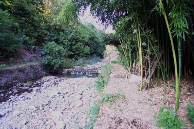 Particolare fiume